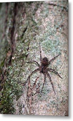 Creepy Spider Metal Print by Karol Livote