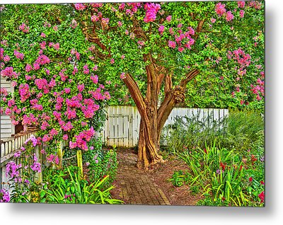 Metal Print featuring the photograph Crepe Myrtle In Wiliamsburg Garden by Jerry Gammon