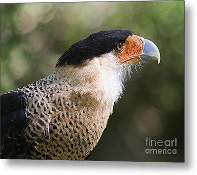 Crested Caracara Bird Of Prey Metal Print