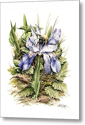 Metal Print featuring the painting Crested Dwarf Iris by Bob  George