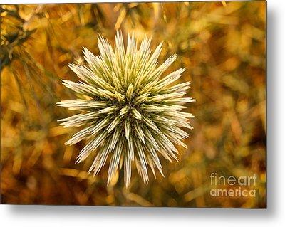 Cretan Flower Metal Print by David Warrington