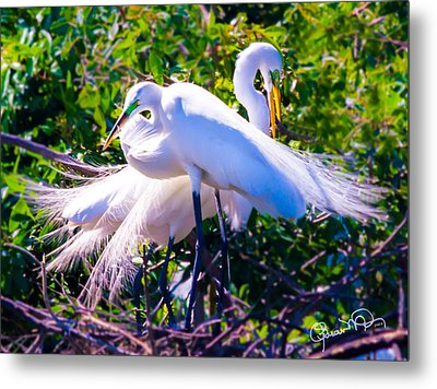 Criss-cross Egrets Metal Print
