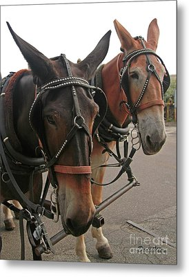 Mules In Harness -crocket And Tubbs Metal Print by Dodie Ulery
