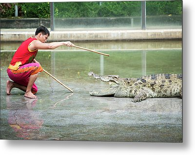 Crocodile Display Metal Print by Pan Xunbin