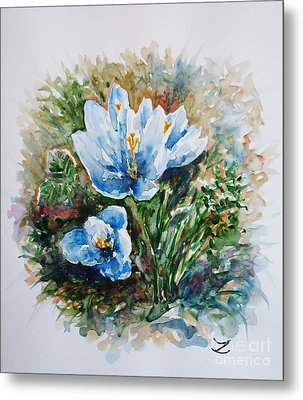 Crocuses Metal Print by Zaira Dzhaubaeva