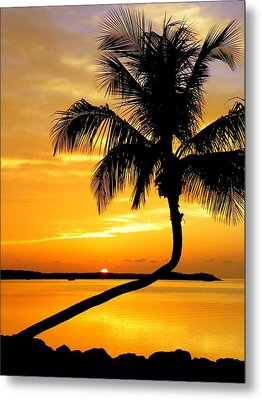Crooked Palm Metal Print