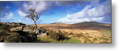 Crooked Tree At Feather Tor, Staple Metal Print by Panoramic Images