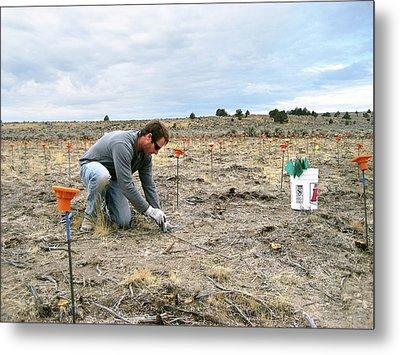Crop Seedling Research Metal Print