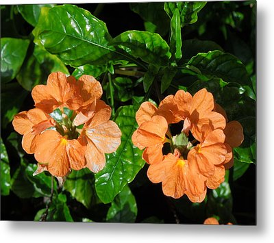 Metal Print featuring the photograph Crossandra by Ron Davidson
