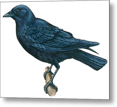 Crow Metal Print by Anonymous