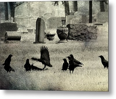 Crow Fight Metal Print by Gothicrow Images