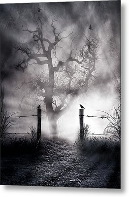 Crow Hallow Metal Print by Peter Chilelli