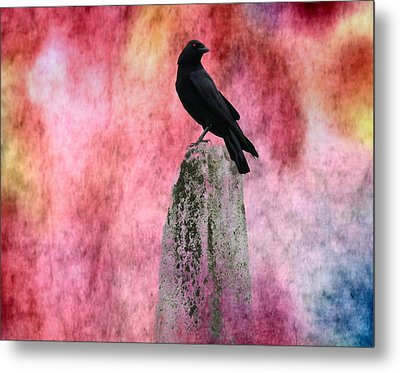 Crow In Colors Metal Print by Gothicrow Images