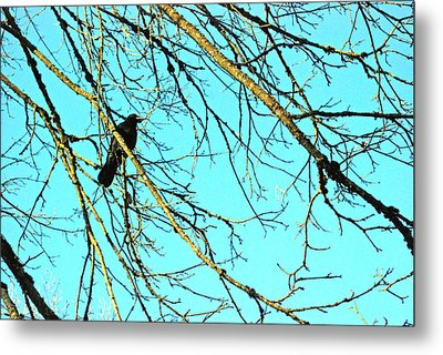 Metal Print featuring the photograph Crow by Kjirsten Collier