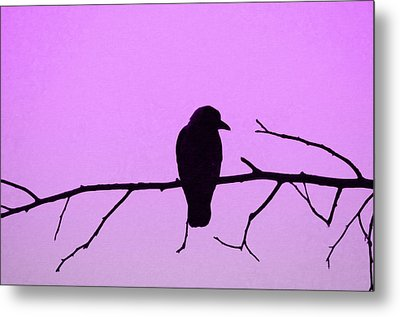 Crow On Branch Metal Print