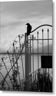 Crow On Gothic Gate Metal Print by Colleen Williams
