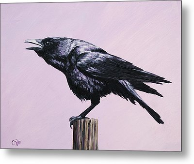 Crow - Sounding Off Metal Print by Crista Forest