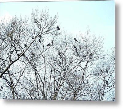 Crow Trees Metal Print
