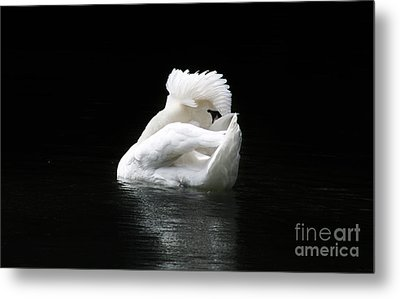Crown Of Feathers Metal Print by Lynn Jackson