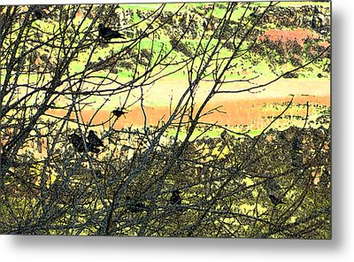 Crows And Two Blackbirds					 Metal Print