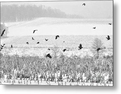 Crows In Cornfield Winter Metal Print by Dan Friend