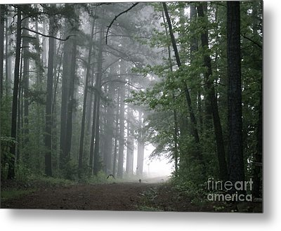 Crows In The Woods Metal Print