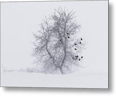 Crows On Tree In Winter Snow Storm Metal Print