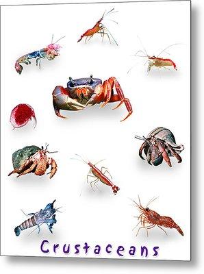 Crustaceans Metal Print by Wernher Krutein