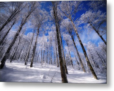 Metal Print featuring the photograph Crystal Vision by Philippe Sainte-Laudy