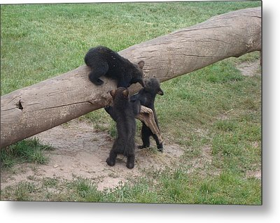Cubs At Play Metal Print