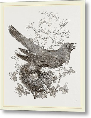 Cuckoo And Nest Metal Print by Litz Collection