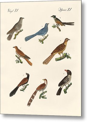 Cuckoos From Various Countries Metal Print by Splendid Art Prints