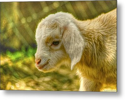 Cuddly Metal Print by Dennis Baswell