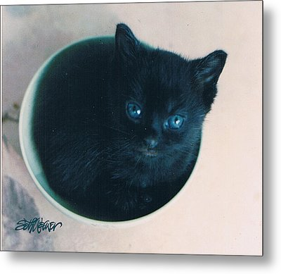 Cup O'kitty Metal Print by Seth Weaver