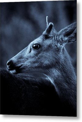 Metal Print featuring the photograph Curious  by Adria Trail