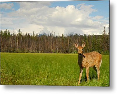Curious Deer In Glacier National Park Metal Print by Larry Moloney