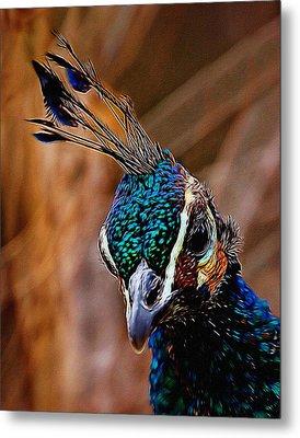 Curious Peacock Digital Art Metal Print