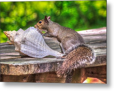 Metal Print featuring the photograph Curious Squirrel by Rob Sellers