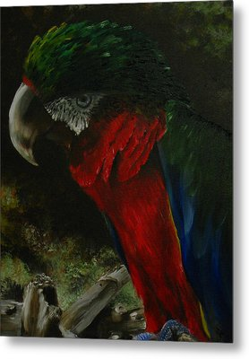 Curtis The Parrot Metal Print by Sherry Robinson