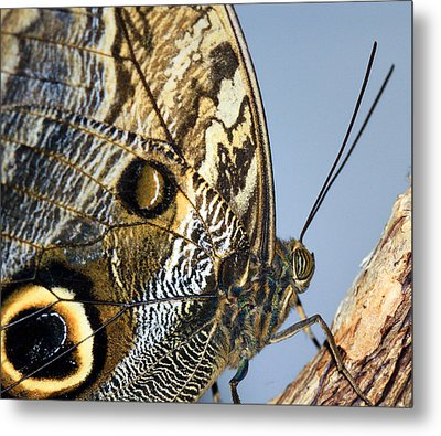 Curve Of A Butterfly Metal Print by Sonya Lang
