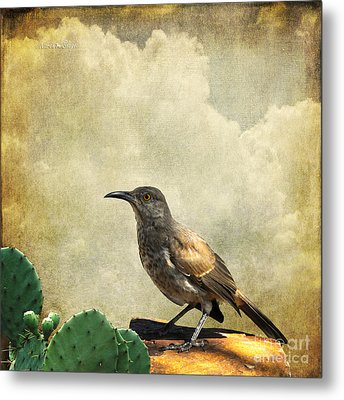 Metal Print featuring the photograph Curved Bill Thrasher by Karen Slagle