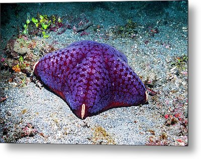 Cushion Starfish On Sea Bed Metal Print by Georgette Douwma