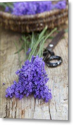Cut Lavender Metal Print by Tim Gainey