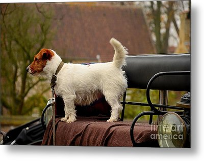 Cute Dog On Carriage Seat Bruges Belgium Metal Print by Imran Ahmed