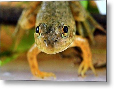 Cute Frog Face Metal Print