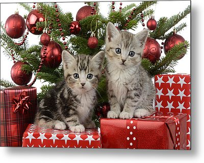 Cute Kitten Xmas Presents Metal Print