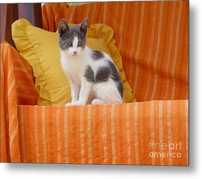 Cute Kitty Metal Print by Vicki Spindler