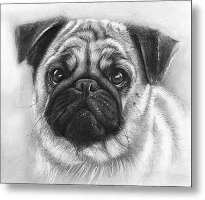 Cute Pug Metal Print by Olga Shvartsur