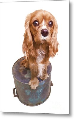 Cute Puppy Card Metal Print by Edward Fielding