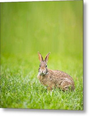 Cute Rabbit Metal Print by Diane Diederich